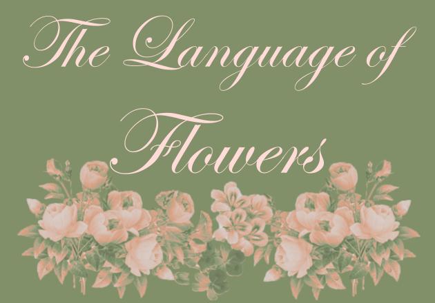 Blumen portfolio